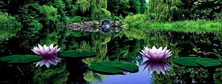 BCALM-mindfulness-meditation-lotus-pond-slider
